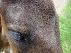 Rodeo (Extreme Close Up)