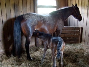 Momma Rita and Her Foal