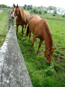 Patusan Farm