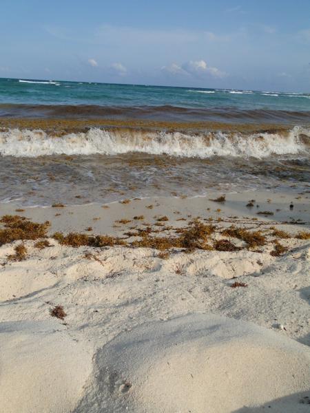 Locally Toned in Mexico: Waves Crashing Ringtone from Akumal